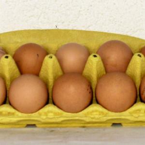 Eier Freiland/Boden